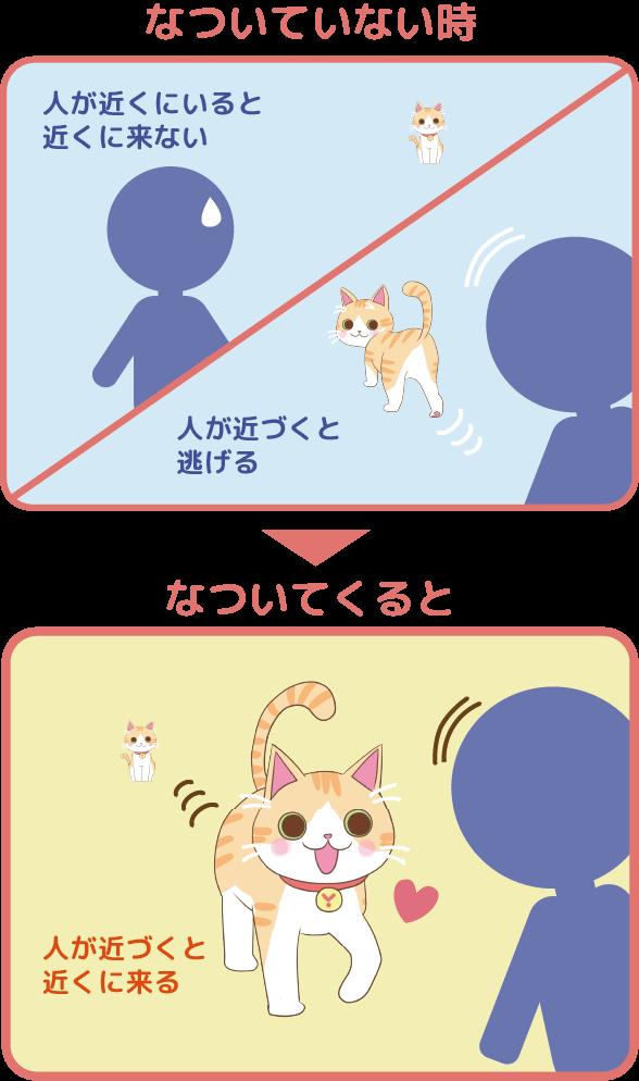 Juno(ユノ)は人が近くにいると近くにこない、人が近づくと逃げる