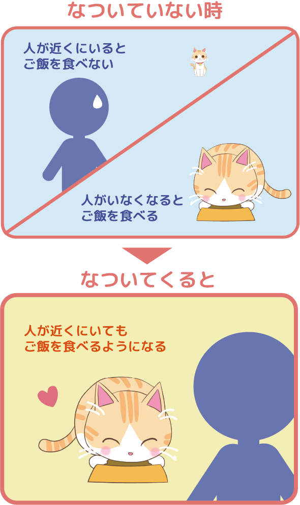 Juno(ユノ)は人が近くにいるとご飯を食べない、人がいなくなるとご飯を食べる